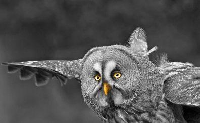 Owl, predator, flight, fly