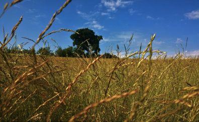 Grass field nature