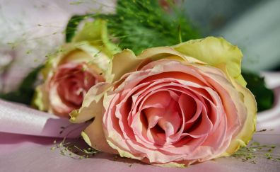 Pink rose, gift, flowers