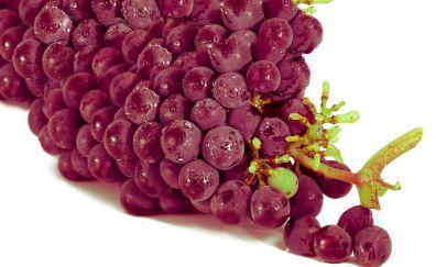 Grape fruits, drops