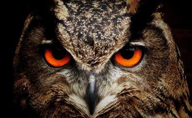 Owl, predator, muzzle, eyes
