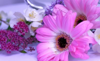 Flowers, pink daisy, white Jasmine