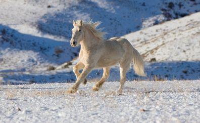 White horse, run, landscape, animal, practice