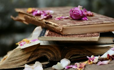 Old books, petals, flowers