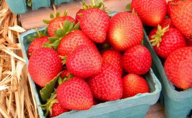 Strawberries, berries in basket