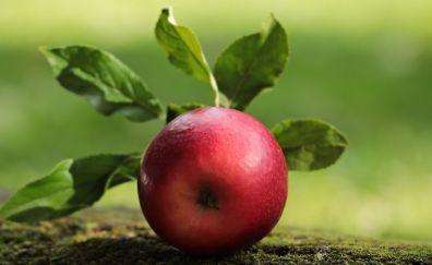 Apple, fruit, close up, 5k