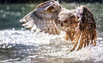 Wings, fly, water splashes, predator, bird, owl