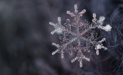 Snowflake, close up, winter