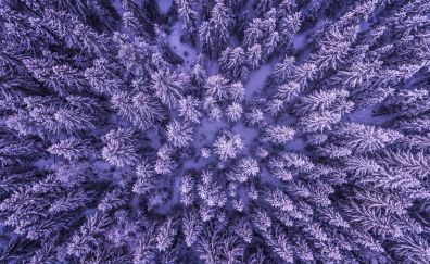 Snowy forest, aerial view, snowfall, trees, winter