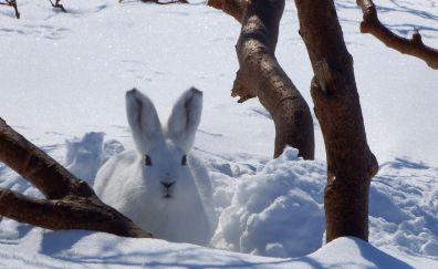 Winter, snow, white, hare, cute, animal
