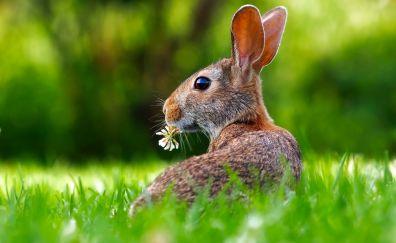 Cute bunny, eating, rabbit, grass