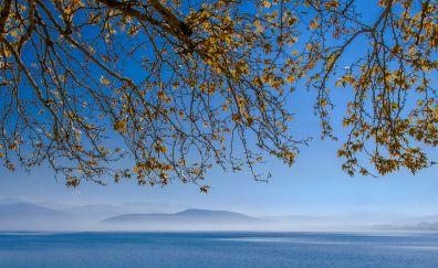 Lake, tree branch, 4k, spring