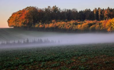 Autumn, mist, fog, landscape, nature, 5k