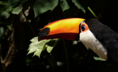 Toucan, bird, long yellow beak