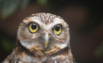 Owl bird, baby bird, curious