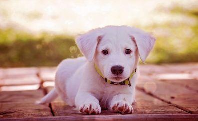 Very cute dog puppy