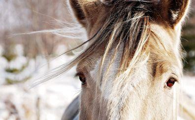 White horse, head, close up