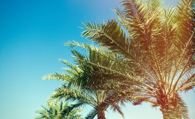 Palm trees, branches, sunlight