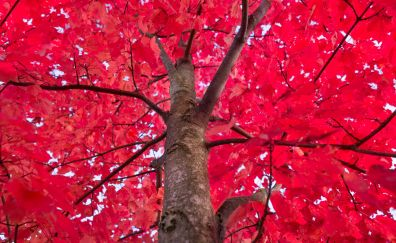 Tree's red branches