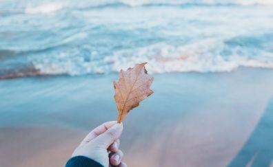 Beach, dry leaf, hands, sea waves