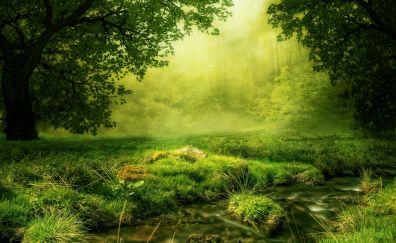 Forest, trees, grass, moss, fog