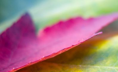 Pink leaf close up view