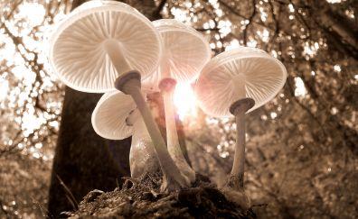 Forest, white mushrooms, fungus