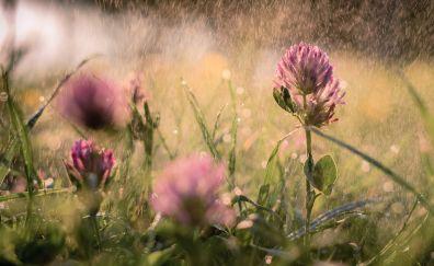 Rain, purple flowers, meadow, plants