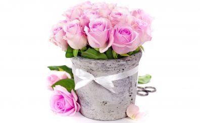 Pink roses in vase, gift
