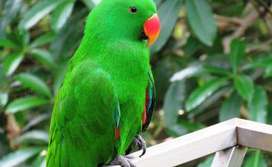 Beautiful bird, green parrot, bird
