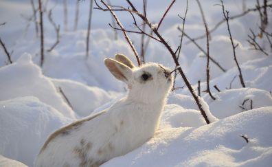 Cute white bunny, snow, winter, animal, 4k