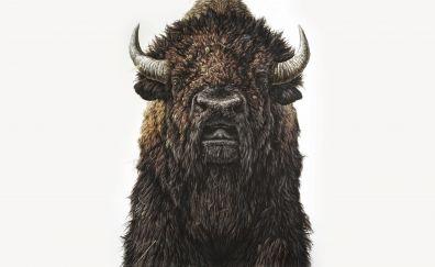 Yak, horns, furry animal, art