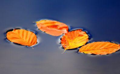 Golden leaves, floating, autumn, 5k