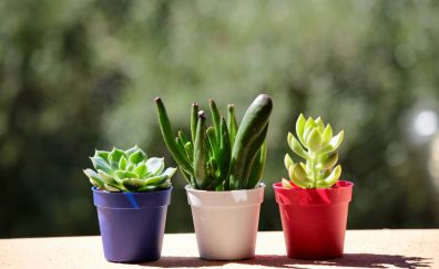 In house plants, cactus, pot