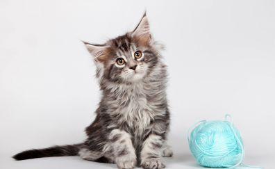 Cute, kitten, adorable, woolen ball