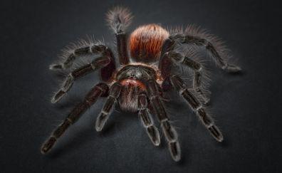 Tarantula arachnophobia spider