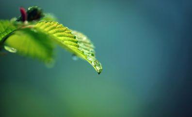 Dew drops, leave, close up, blur