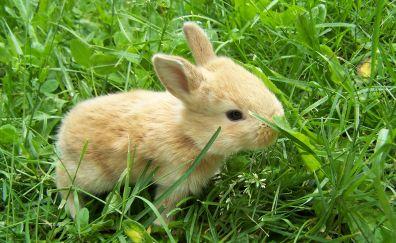 Cute, baby bunny, rabbit, animal