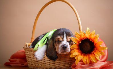 Cute puppy, dog, sleeping, basket, flowers