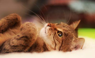 Kitten cat animal