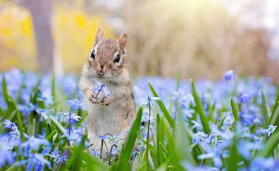 Chipmunk, meadow, spring, flowers, cute