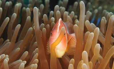Coral, fish, underwater, animal