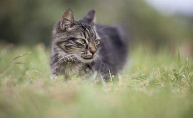 Cat walk, grass field, grass