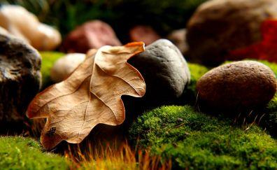 Dry leaf, close up, moss, stones