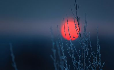 Plants, plant treads, sunset, sun
