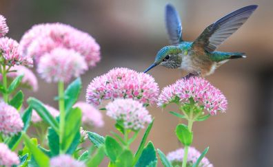 Hummingbird, pollination, birds, flowers
