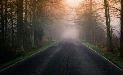 Road, mist, tree