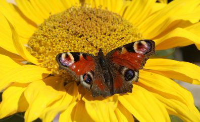 Butterfly and flower close up view