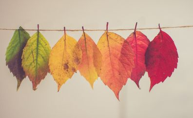 Hanging colorful leaves