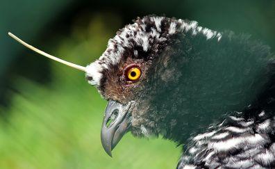 Ave, exotic, bird, muzzle